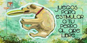 Juegos para estimular a tu perro al aire libre - www.topaula.com