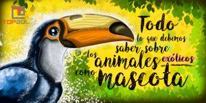 Todo lo que debemos saber sobre los animales exóticos como mascota - www.topaula.com