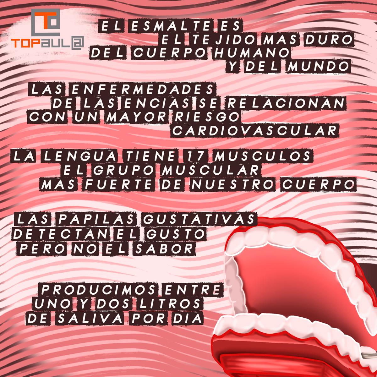 Infografía Curiosidades sobre nuestra boca - www.topaula.com