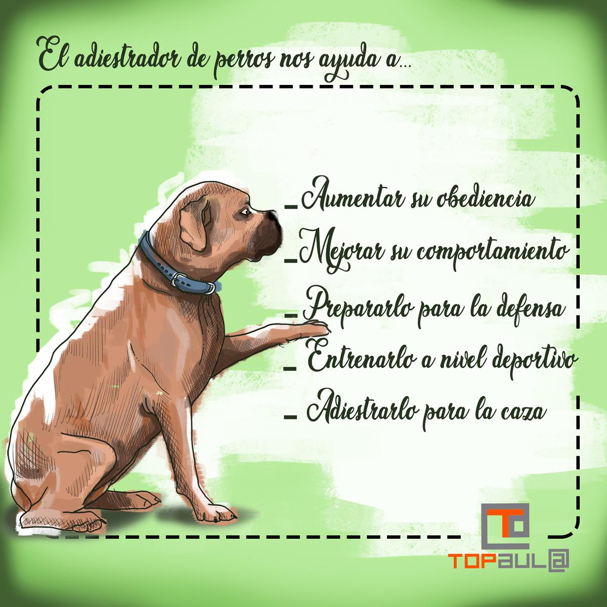 Infografía ¿Debería contratar los servicios de un adiestrador para mi perro? - www.topaulasalud.com