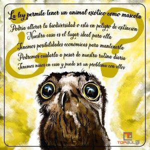 Infografía Todo lo que debemos saber sobre los animales exóticos como mascota - www.topaula.com