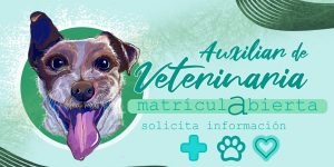 TOP aul@ - Auxiliar de Veterinaria en Barcelona