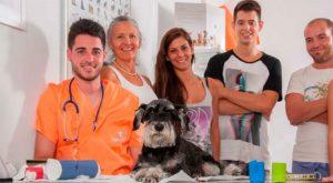 Auxiliar Técnico Veterinario - TOP aul@