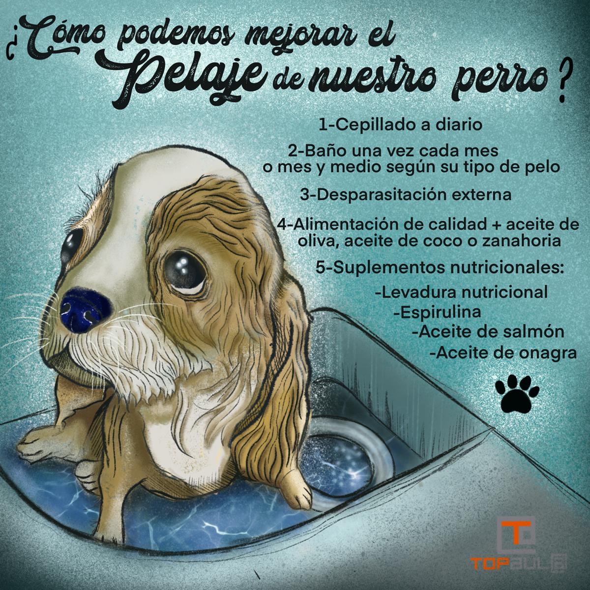Infografía ¿Cómo podemos mejorar el pelaje de nuestro perro? - www.topaulasalud.com