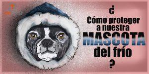 Como proteger a nuestra mascota del frío - www.topaula.com
