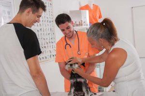 Practicas Curso Auxiliar Veterinaria