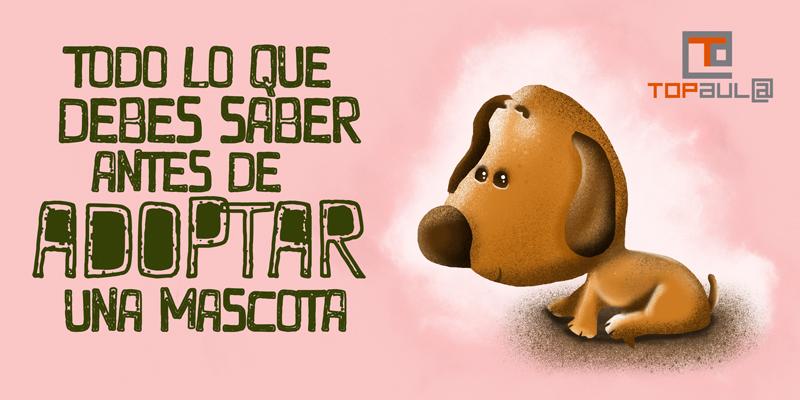 Todo lo que debes saber antes de adoptar a una mascota - www.topaula.com