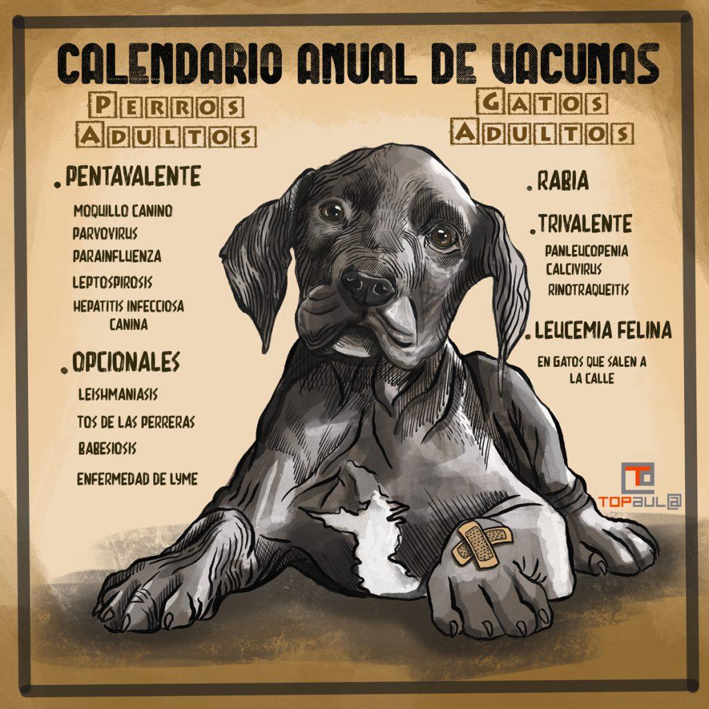 Infografía Calendario anual de vacunas para perros y gatos - www.topaula.com
