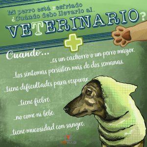 Infografía ¿Se puede resfriar mi perro? Todo lo que debes saber - www.topaula.com