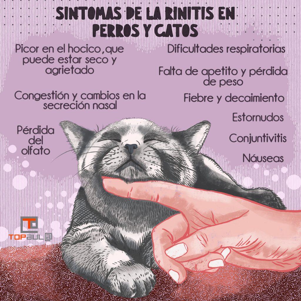 Infografía - Rinitis en perros y gatos: ¿Qué la causa y cómo la tratamos? - www.topaula.com