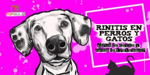 Rinitis en perros y gatos: ¿Qué la causa y cómo la tratamos? - www.topaula.com