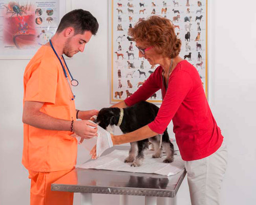 Prácticas Curso Auxiliar Ténico Veterinario - TOP aul@