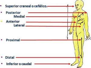 Lección 1.5 Términos Posicionales - TOP aul@